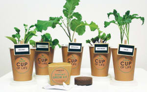 The coffee cup that becomes a plant