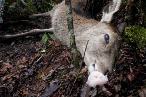 $16 Million On Other Deer Control Methods - NSW War on Deer