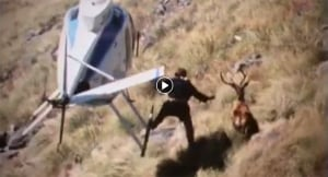 New Zealand Deer Wars Trailer