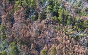 Tree Death During Climate Extremes