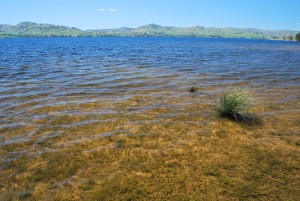 Reciprocal licences for Lake Hume