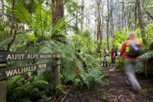 Walk of the week: Walhalla, Vic