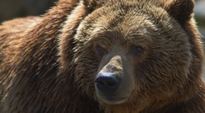 Trapper Kills Bear that Killed His Wife and Baby