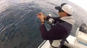 VIDEO: How to catch monster groper