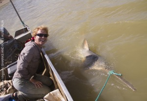 Have you seen a sawfish?