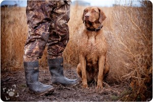 Hunting Dog Ban - ACT