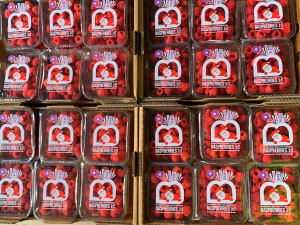 Santa pops onto raspberry packs in QLD