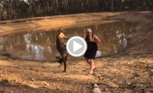 Kangaroo Kicks Man to Ground