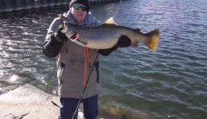 VIDEO: Milwaukee's monster brown trout