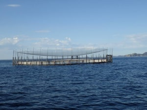 Port Stephens temporary fishing closure extended
