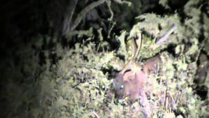 Illegal deer poaching has residents of north-east Victoria raise safety concerns.