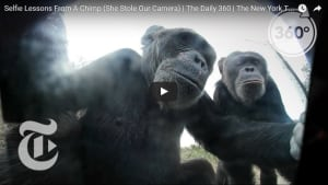 Video: Selfie lessons from a chimp