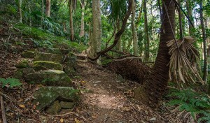 Trail crews check out Wollongong