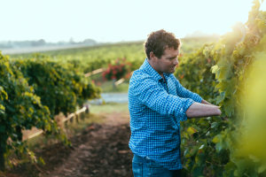 Angove Family takes gold in Organic Wine Awards