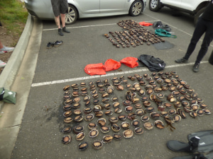 Car seized and five arrested in illegal abalone haul