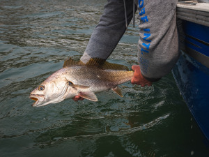 VIDEO: Advanced catch and release techniques