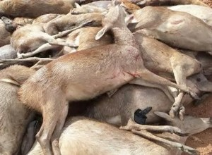 Invasive Species Council Wants G Licence for Deer Hunting Abolished