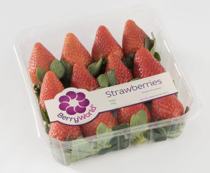 Berry producer takes a punt at new PET punnet