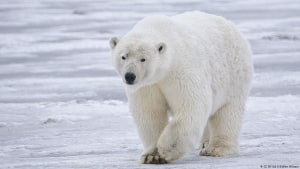 Polar kills man in Norwegian campground