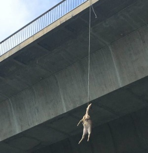 Rusa Found Hanging From Bridge