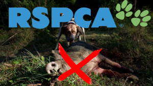 RSPCA Opposes Legal Pig Hunting in Australia
