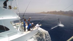 VIDEO: Cape Verde blue marlin action