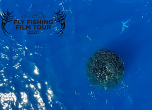 VIDEO: Fly fishing for striped marlin in Mexico