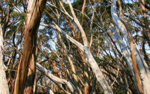 Responsible Wood launches 'PEFC Australia' website