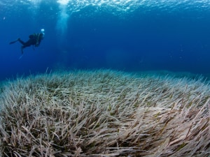 Shipwrecks saved by seagrass