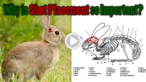 Shot placement on small game - birds and rabbits