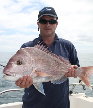 Snapper survey reveals baby boom in Port Phillip