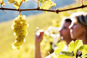 On the grapevine: climate may change winemaking