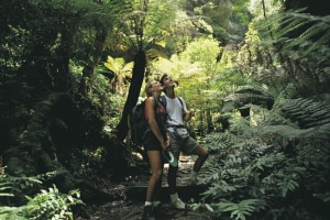 NSW National Parks see a surge in visitor numbers