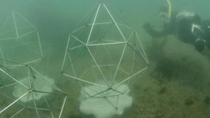 Artificial reef debuts at Sydney Opera House