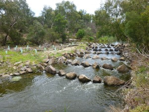 2018 International Fish Passage Conference to be held in Albury