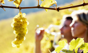 ACCC: Reforms for wine grape growers necessary