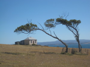 Wind blown landscape on Maria Island