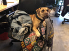 Dog of the Month: The Monkeys production assistant Friday