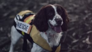 Campaign urges people to respect a guide dogs' job