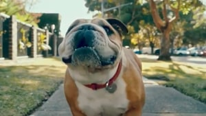 Clipsal is a dog's best friend in new campaign from Bohemia and M&C Saatchi