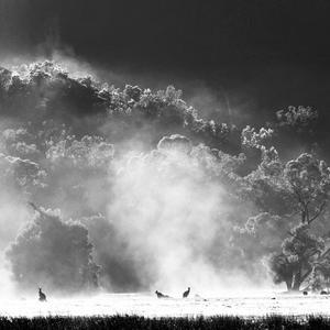 Black And White Photo Comp Winner And Runners Up