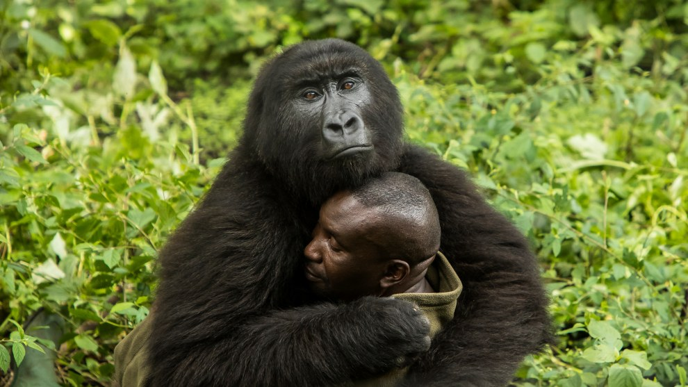 The Human Touch by James Gifford, Human/Nature Winner, Virunga National Park, Democratic Republic of the Congo.