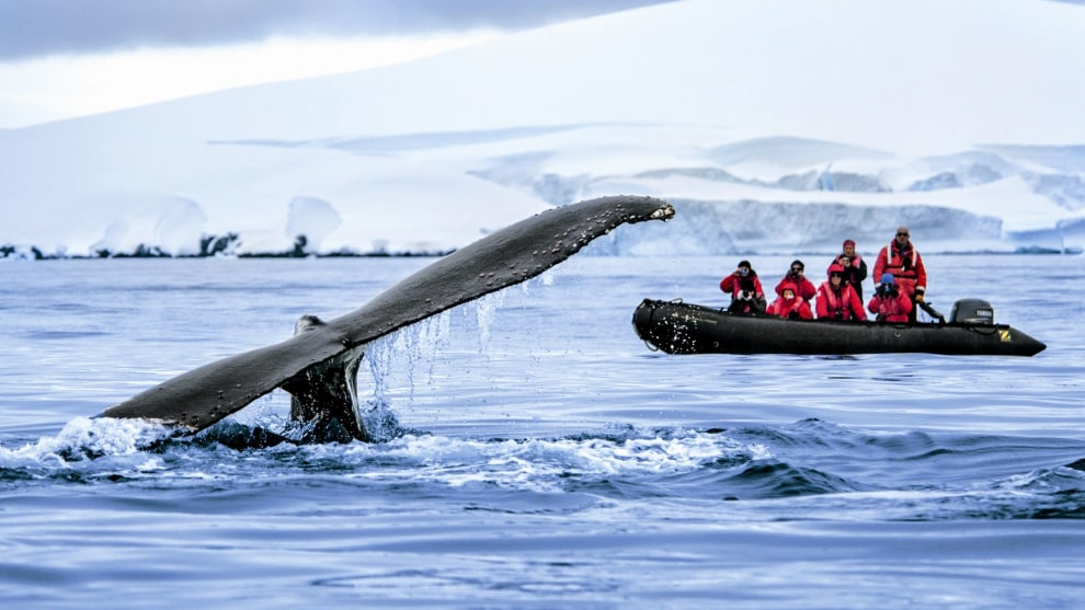 Exciting whale sightings in Antarctica. © PONANT Lorraine Turci