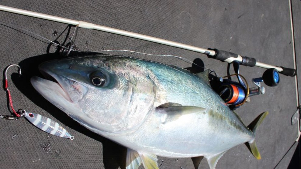 Light tackle micro-jigging for snapper, tuna and kingfish ...