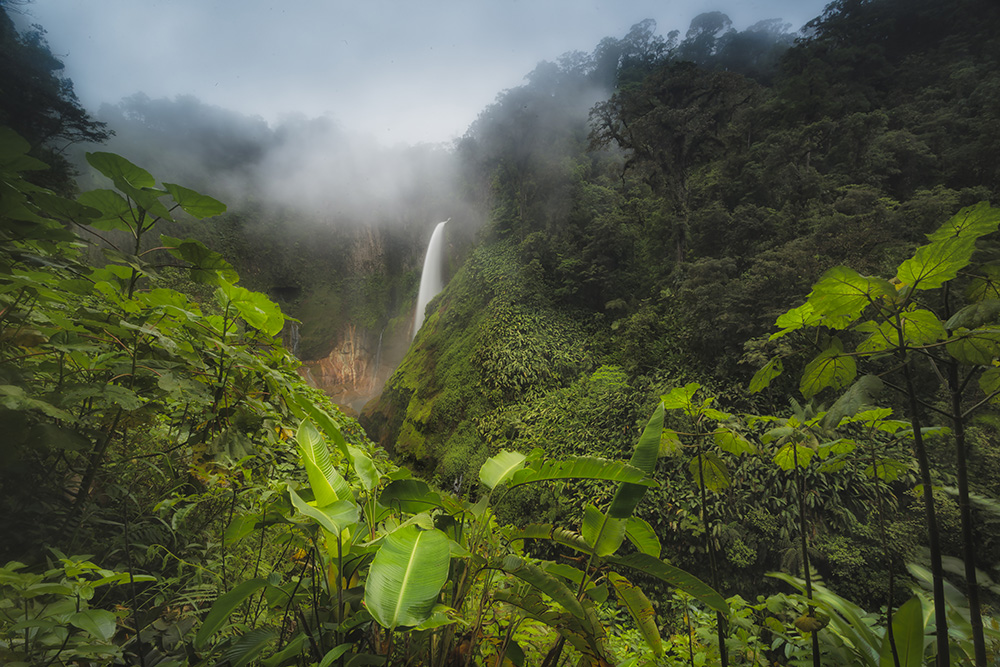 10 Tips for Capturing the Essence of a Rainforest |Tropical Rainforest Photography