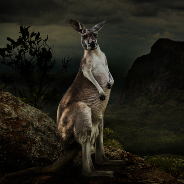Image by Dasha Riley, 2nd place winner in the Australia category at the 2016 Sony World Photography Awards.