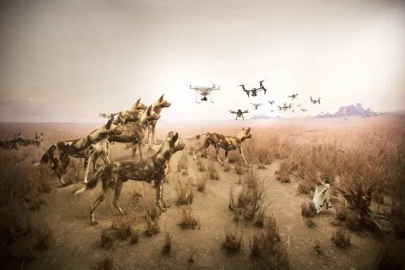 © Cade Martin. Hyena, from the series, Diorama.