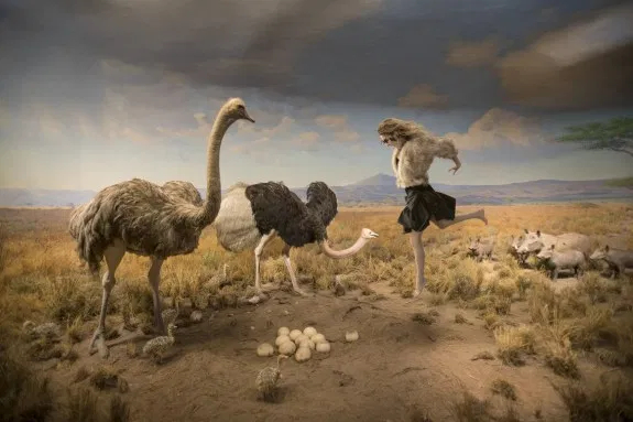 © Cade Martin. Ostrich, from the series, Diorama.