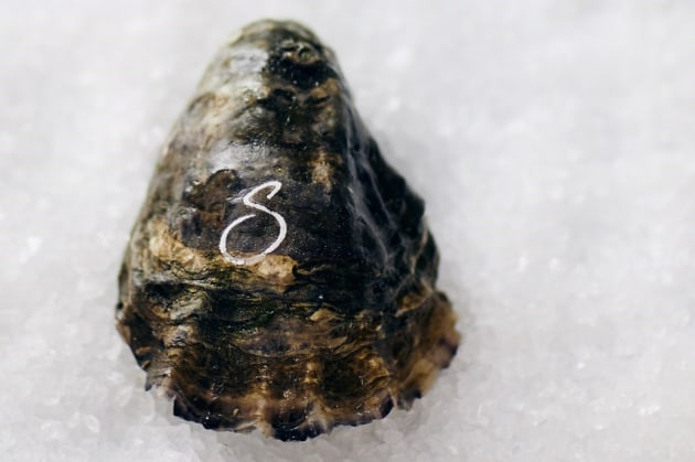 Laser onto oysters: New technolgy from Tasmania