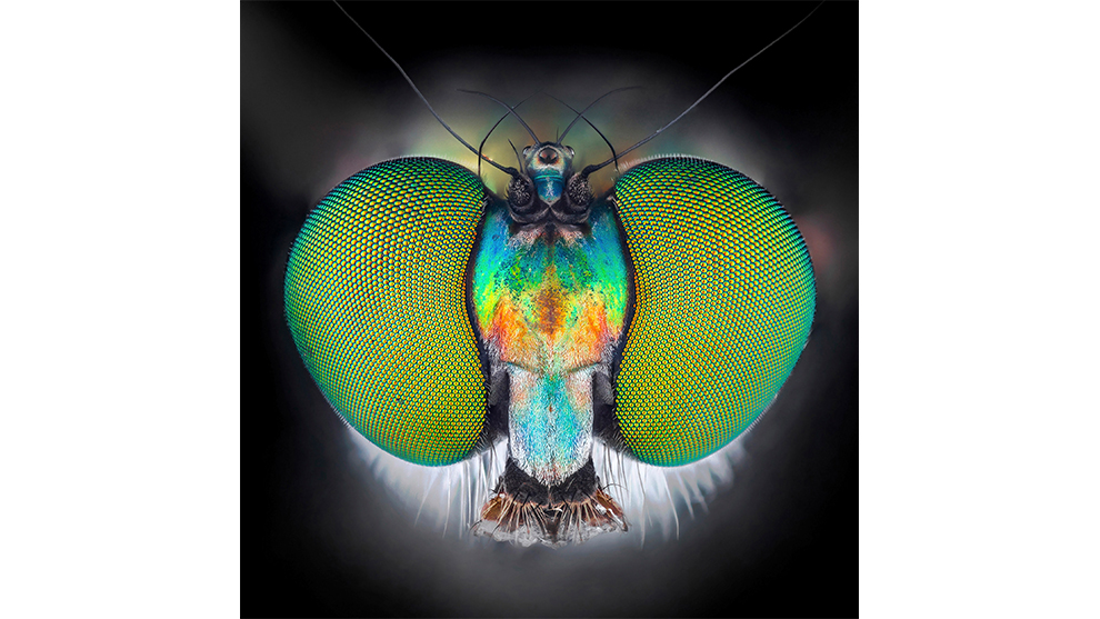 Ali Moughnieh, Insect Headshots, Winner: Animal and Nature.